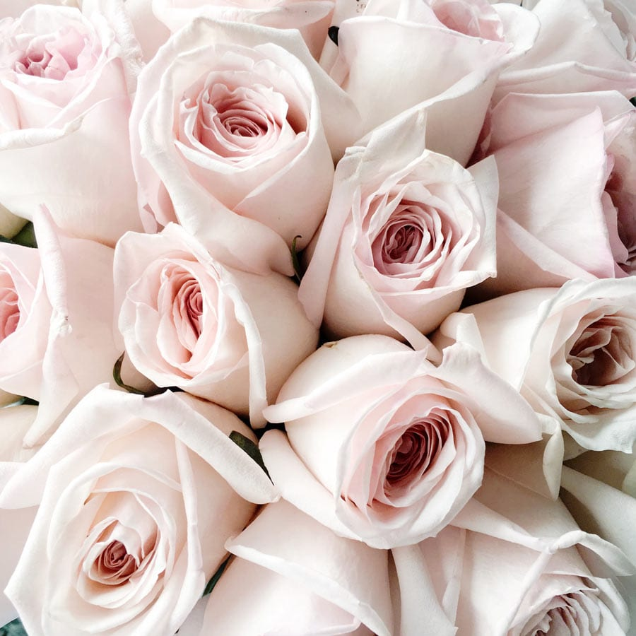JH_BLOG_roses