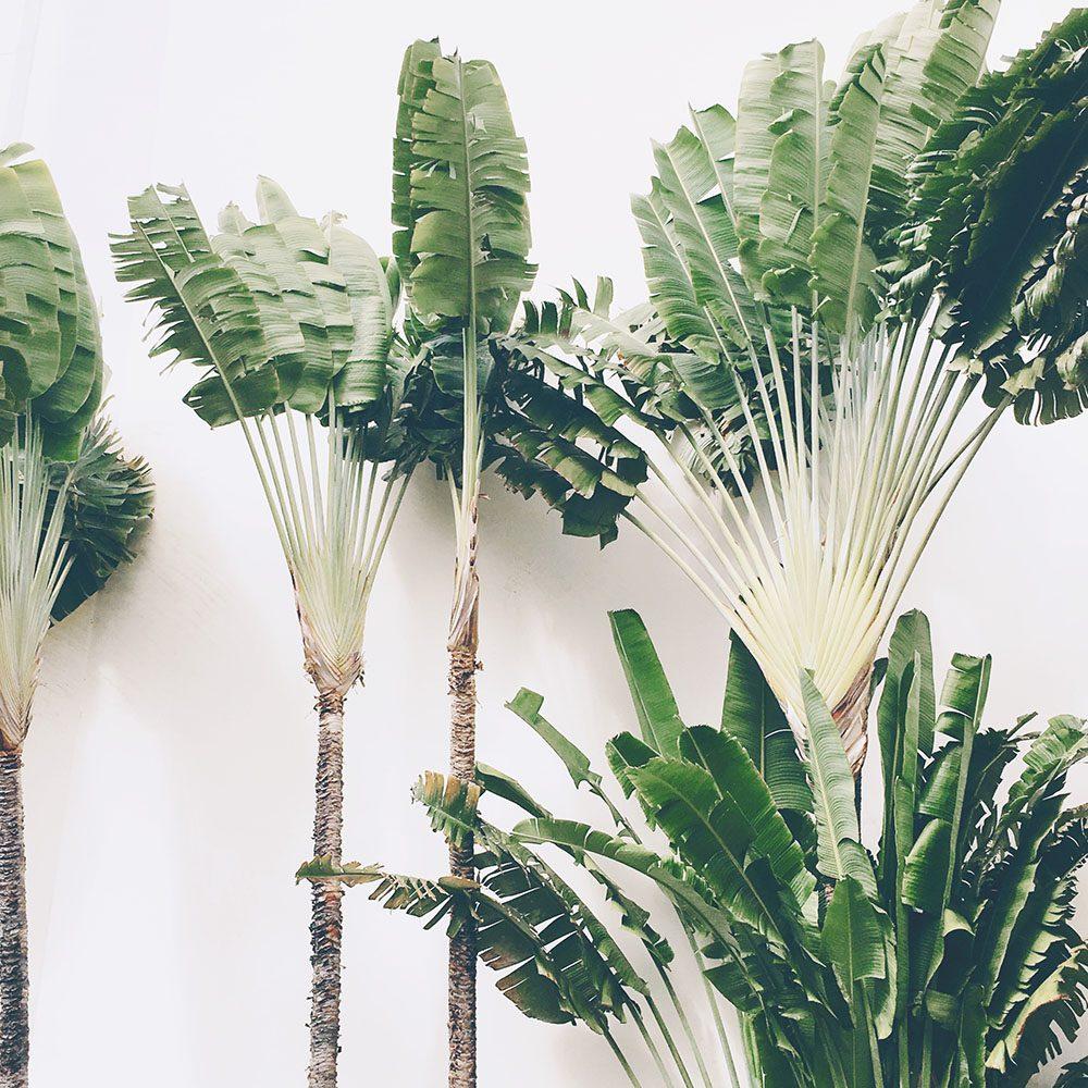fairmont-maui-palms