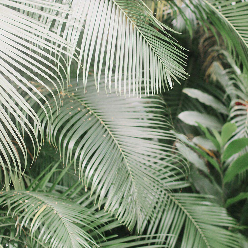 palm-tree-at-fairmont