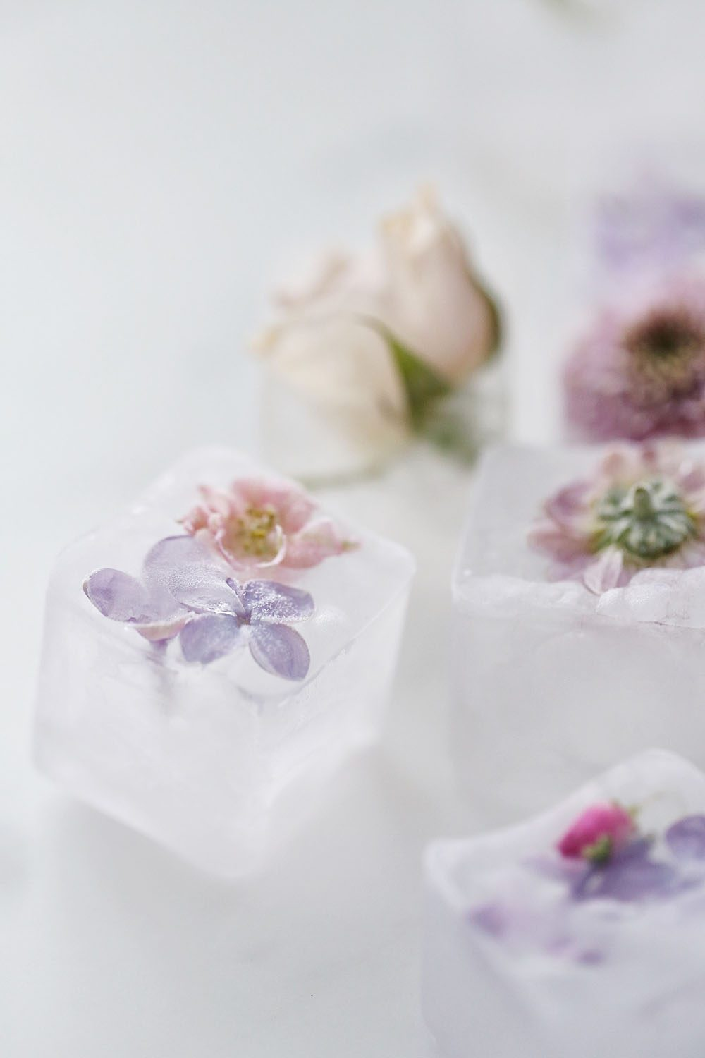 Jillian Harris DIY Floral Ice Cube