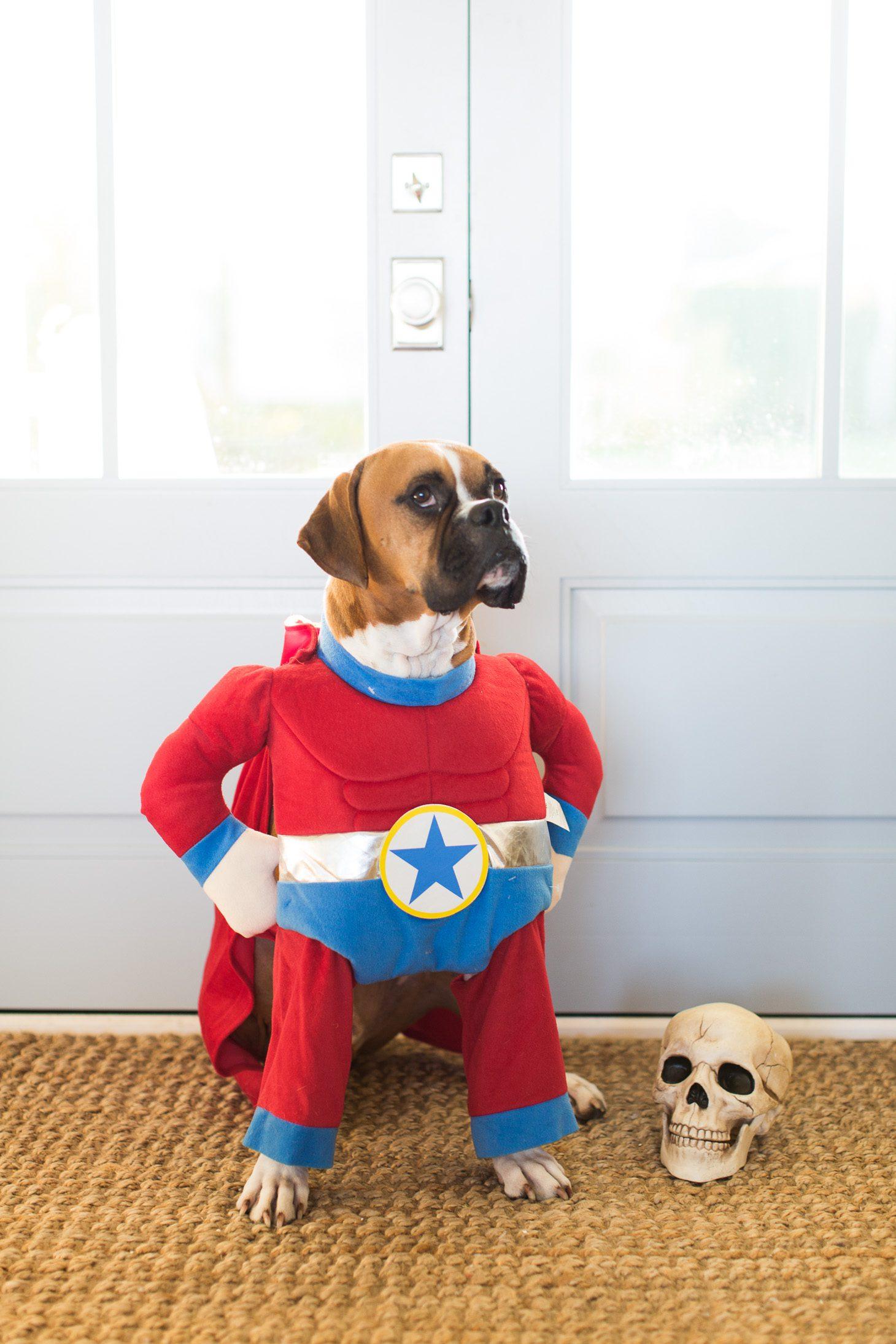 Jillian Harris Halloween Costumes