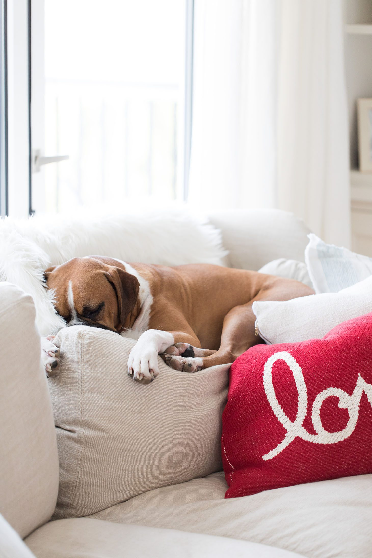 Jillian Harris Gift Guide for Pets