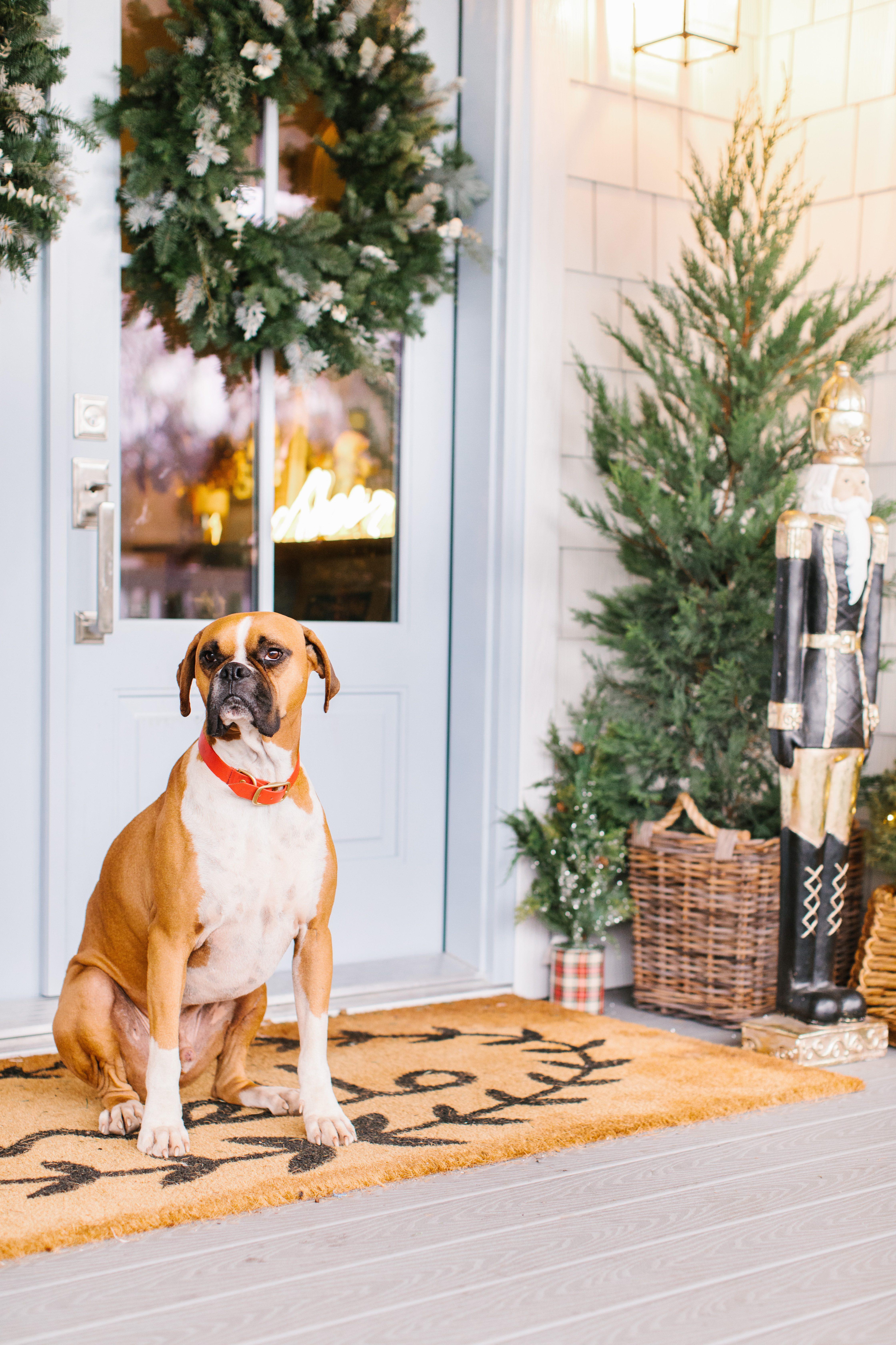 Jillian Harris 12 Days of Christmas Wayfair Giveaway
