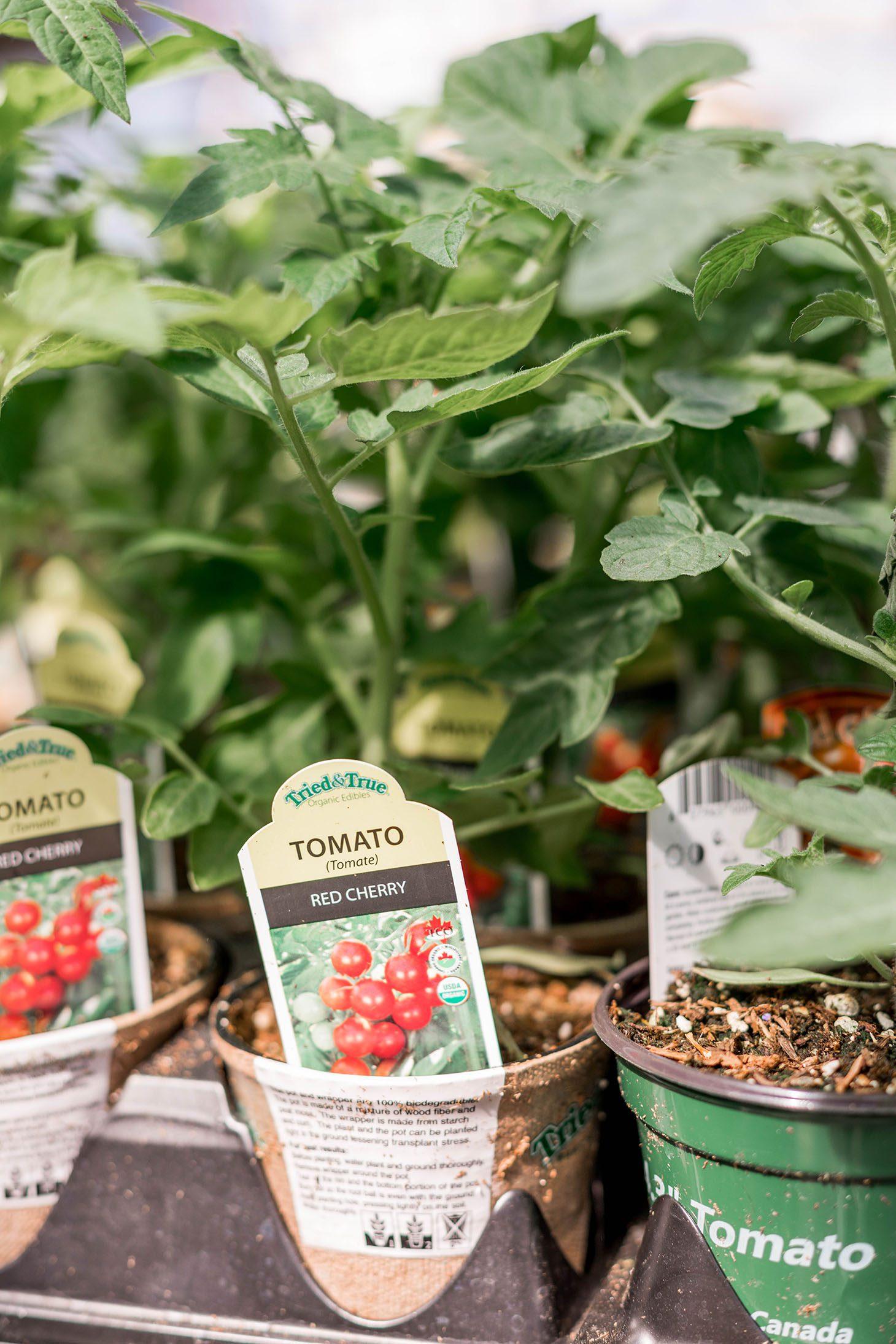 Jillian Harris 5 Veggie Garden Must Knows