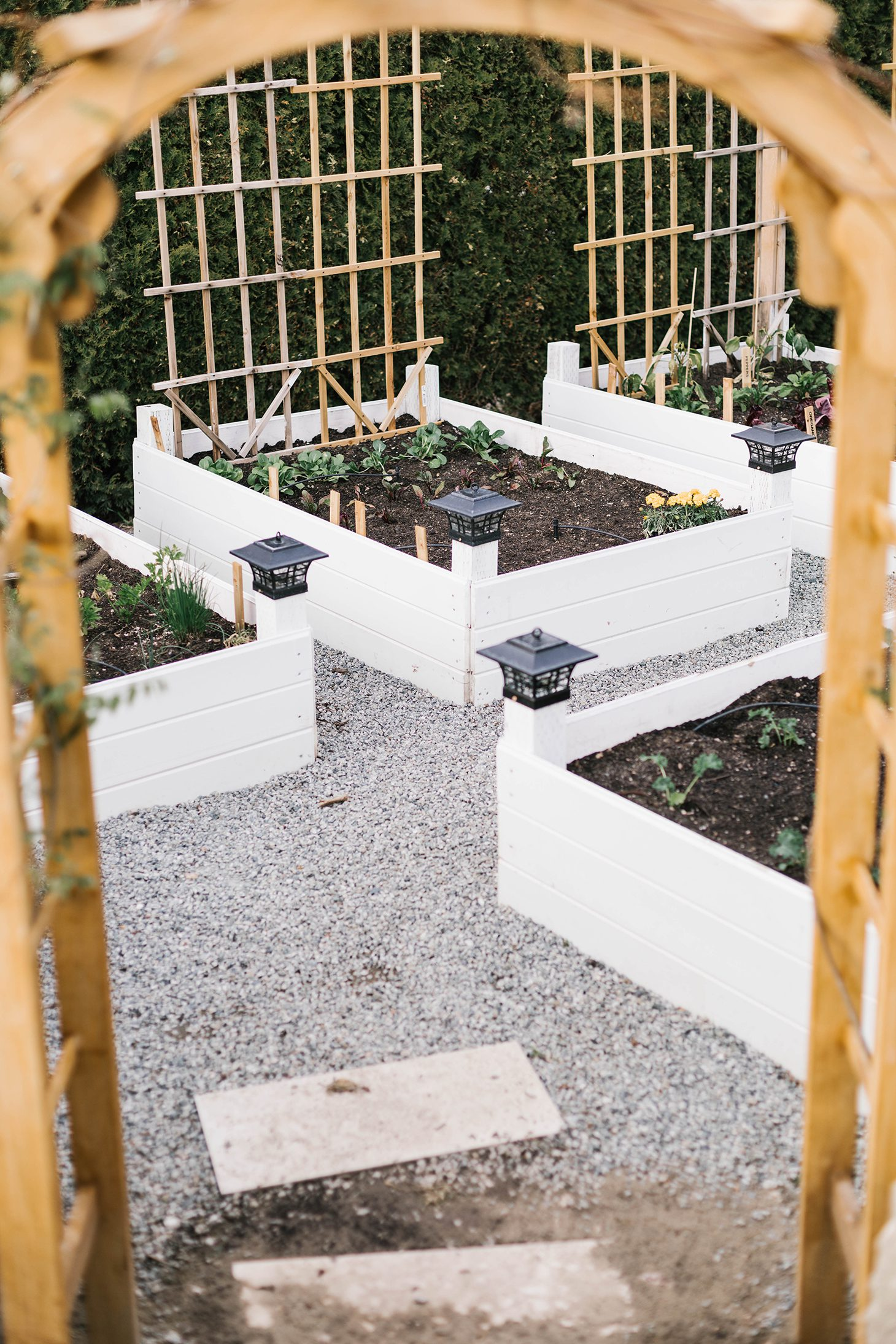 Jillian Harris Vegetable Garden