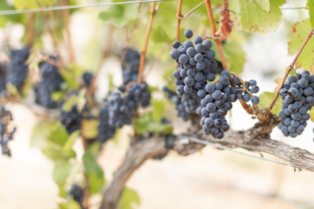Kismet Winery in Oliver, BC