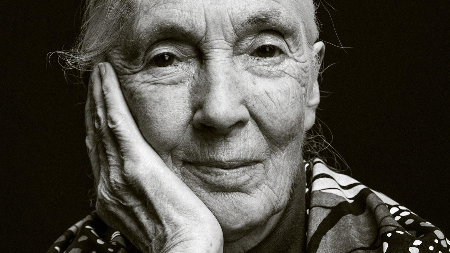 Jane Goodall Women's History Month Round-Up