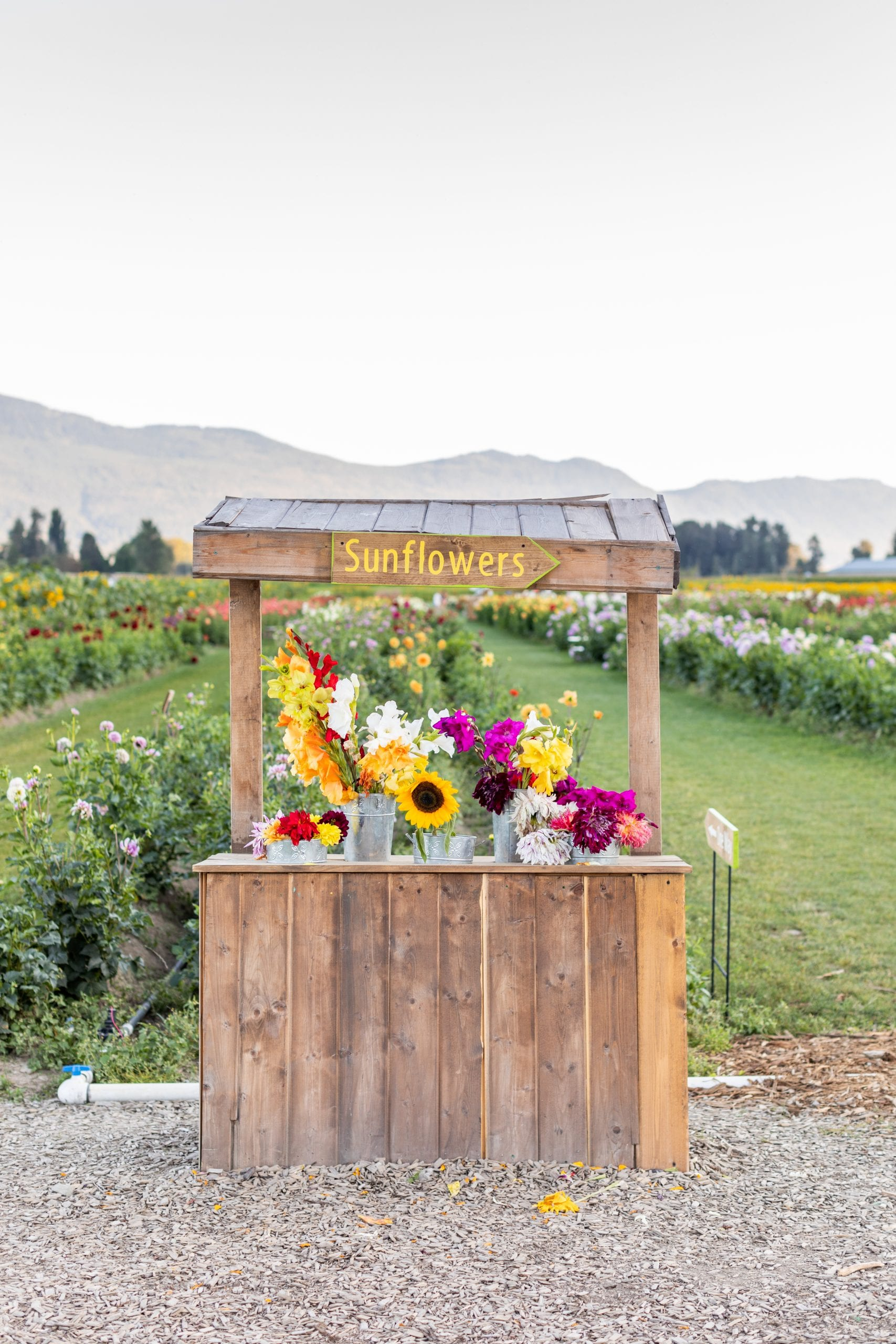 Jillian Harris is now offering Stock Photo Imagery through The Jilly Academy Campus Store such as this  image of a floral stand at a flower farm.